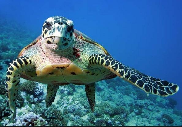 Ubud and Turtle Island Tour