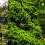 Tegalalang Rice Terrace, Bali Swing & Tegenungan Waterfall