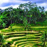 Tegalalang Rice Terrace, Bali Swing & Tanah Lot Temple